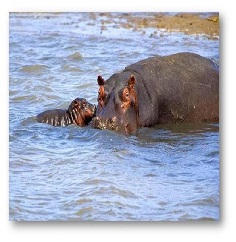 Un voyage inédit au cœur de la nature sud-africaine