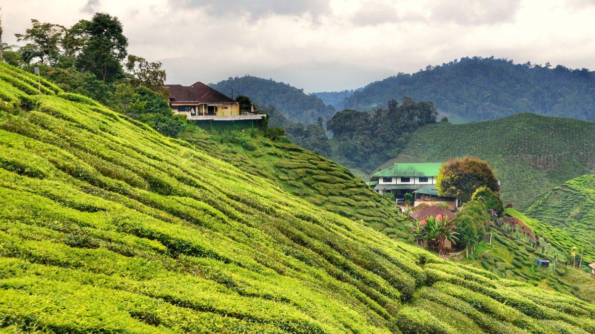 Les comportements à adopter pour des vacances sereines en Malaisie