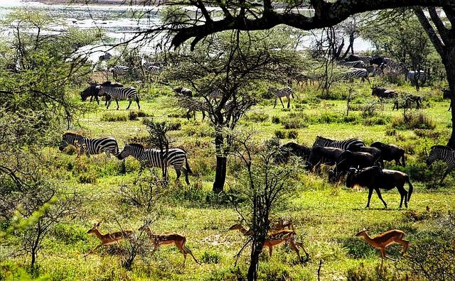 Si on compare Saadani aux anciens parcs tanzaniens, il n'a pas encore la même teneur en faune du « Big Five ».